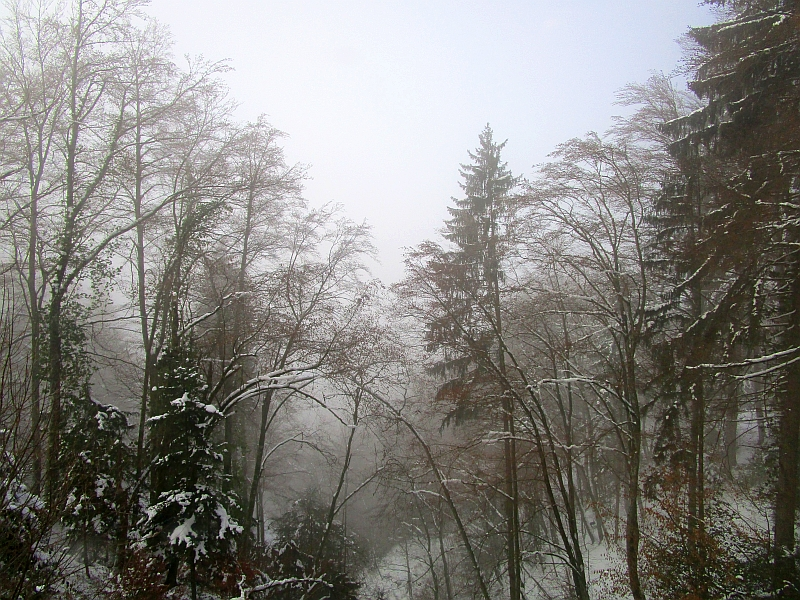 http://www.bahnreiseberichte.de/078-Montreux-Vevey-Riviera/78-32Rochers-de-Naye-Talfahrt.JPG