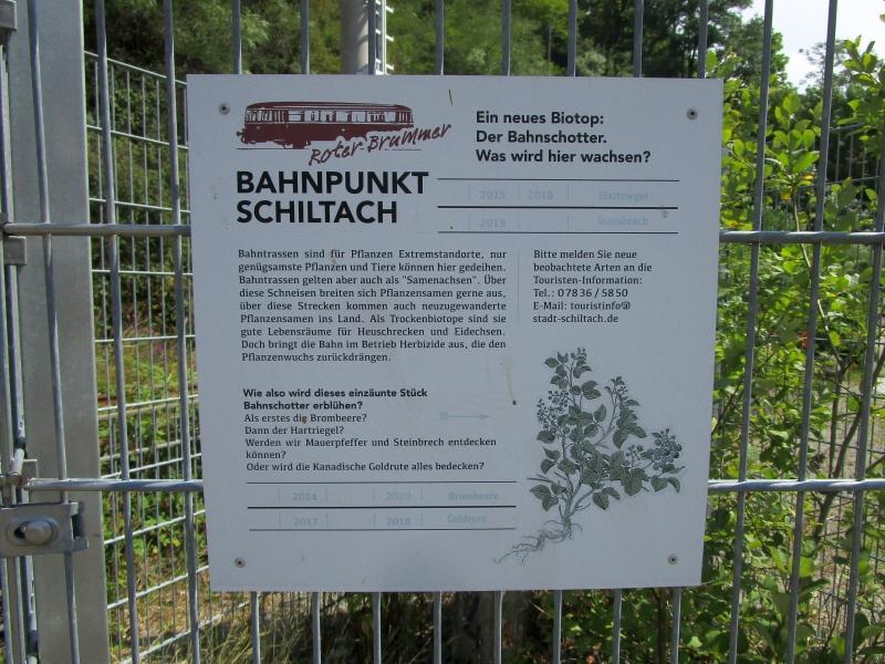 http://www.bahnreiseberichte.de/089-Kinzigtal/89-34Schiltach-Bahnschotter-Biotop.JPG